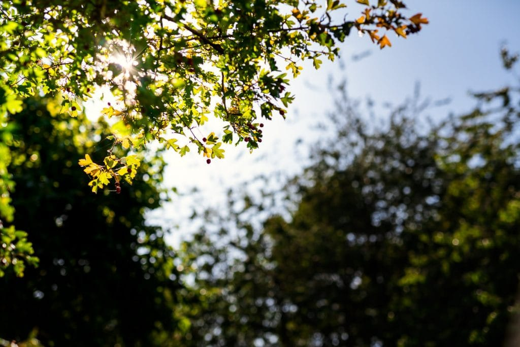 Late summer rays at Ingoldisthorpe Hall